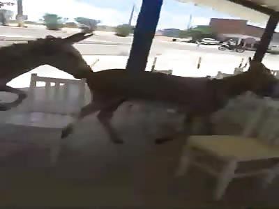 Rapist Animal