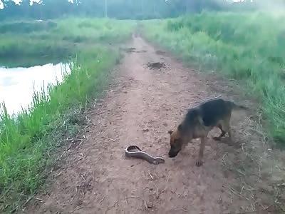 Poor dog VS Electric Fish