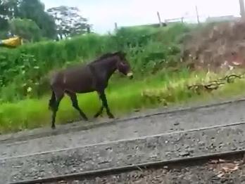 Poor Horse Witnessed his Friend's Fatal Crash