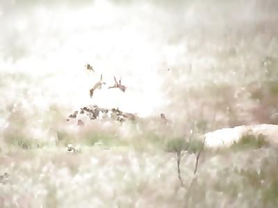 Rifles versus Prairie Dogs