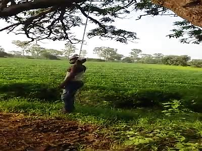 THE HANGED TREE - 2