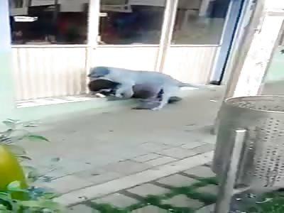 dog grabs a dwarf on the street