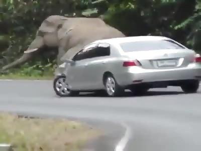 Annoying elephant