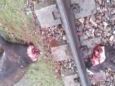 shocking  Train decapitated donkey