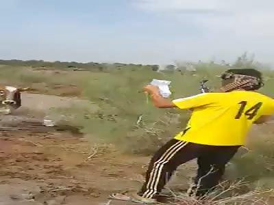 A coward destroys a cow