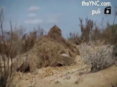 Sniper (video1)