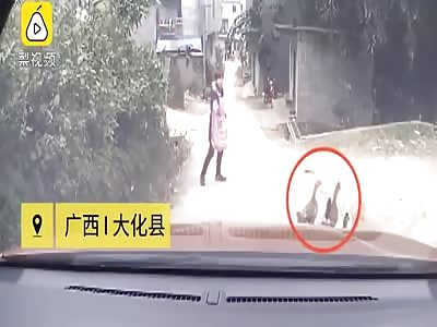 driver kills a man after kicking a duck