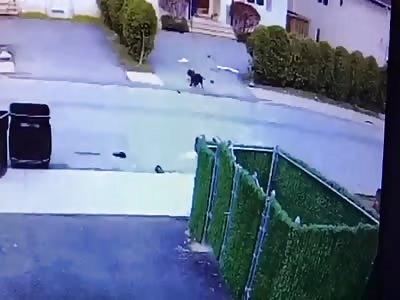 Graphic Dog attacks toddler