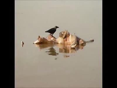 ganges river bodies 2