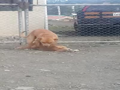 NECROFILIA DOG