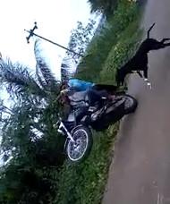 Nice Dog .