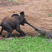 Wildlife Battle at its Finest