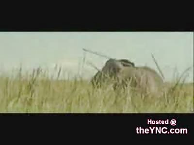 Brutal Hunting in Africa