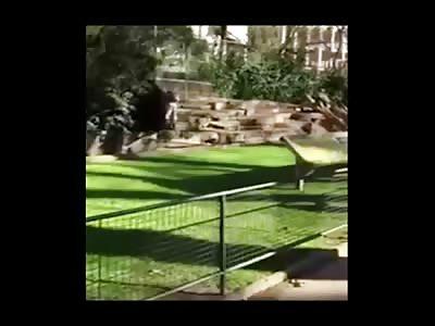 Shocking Video Shows Lion Pride Attack a Man