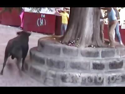 HAD ENOUGH! Bull Runs Head First into Wall Killing Himself