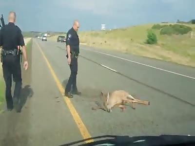 humane cop shoots an injured deer with a shotgun