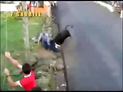 Bulls vs Humans