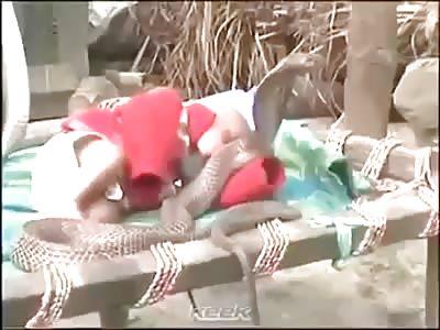Snakes protecting a baby. Kerala India