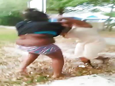 niggers fight