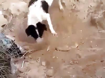 So Sad: Dog Buries Dead Puppy